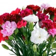 Stock Photo: Posy of fragrant,multicolor carnations