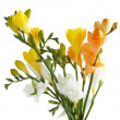 Stock Photo: Multicolor fresias in posy isolated