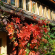 Cottage and red leaves of creeper at autumn — Stock Photo