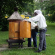 Stock Photo: Beekeepers workin in apiary