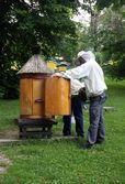 Beekeepers workin in apiary — Stock Photo