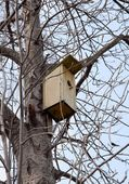 Wooden shed for incubation wild birds on high tree — Stock Photo