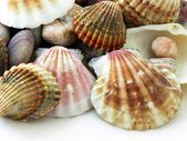 Snails' shells from south,warm seas as souvenire from foreign tour — Stock Photo
