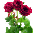 Stock Photo: Red roses in posy