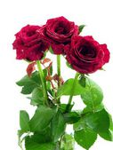 Red roses in posy — Stock Photo