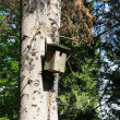 Stock Photo: Wooden breeding kennel on tree in forest