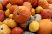 Orange pumpkins as tasty vegetable — Stock Photo