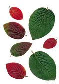 Multicolor leaves as pattern for background — Stockfoto