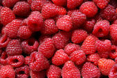 Red,sweet,tasty raspberries — Stock Photo