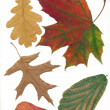 Stock Photo: Multicolor leaves at autumn