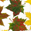Multicolor leaves at autumn — Stock Photo
