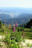 Paroramic view at Krynica resort from Jaworzyna mountain and flowers — Stock Photo