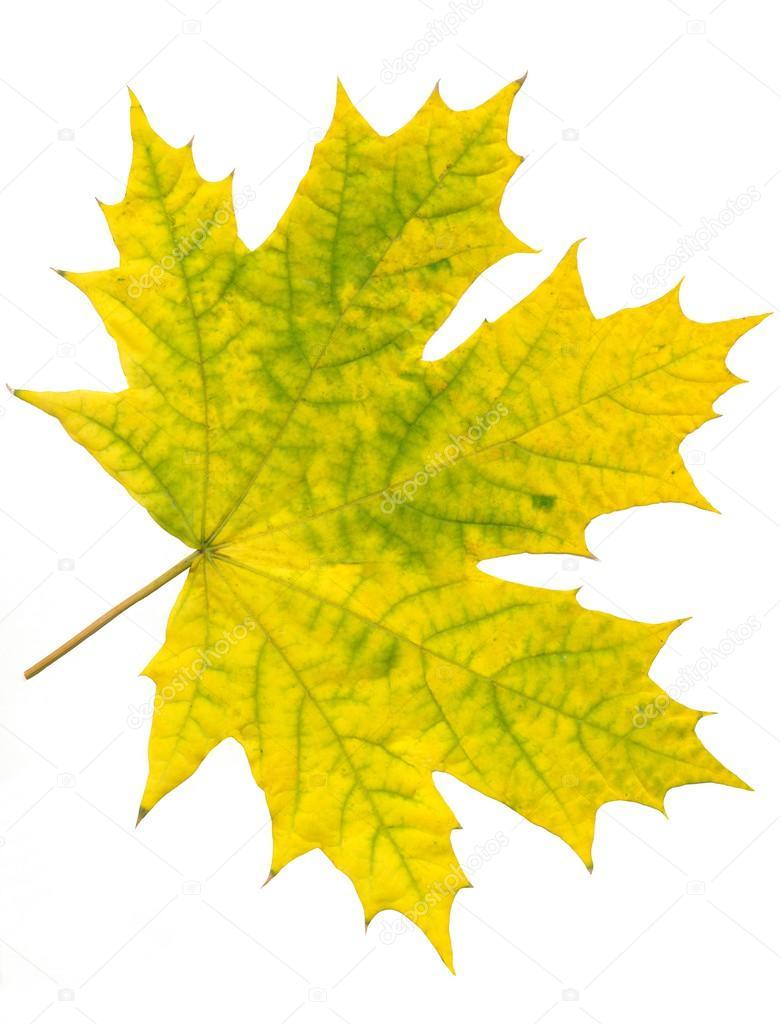 多色树叶在秋天– 图库图片