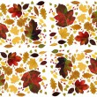 Multicolor leaves as floral background — Stock Photo