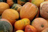 Orange tasty pumpkins — Stock Photo