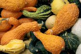Ornamental,inedible,multicolor pumpkins — Stock Photo