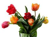 Multicolor tulips in posy — Stock Photo