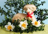 Easter  traditional decoration — Stock Photo
