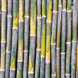 Bamboo pattern background — Stock Photo