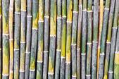 фон модель бамбук — Стоковое фото