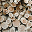 A pile of cut wood stump log texture  — Stockfoto