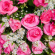 Bright pink fresh roses — Stock Photo