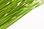 Chinese chive tilted on white background — Stock Photo