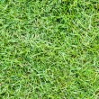 Green grass in the playground — Photo