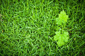 Macro of green leaf, natural fresh — Stock Photo