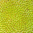 Texture background of  Jackfruit — Stock Photo