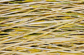 Pattern of bamboo background — ストック写真