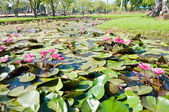 Pond full of water Lotus — Stock Photo