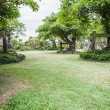 Landscape of Garden with Freshly Mown Lawn — Stock Photo #41208237