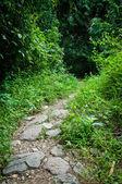 Путь в зеленый лес — Стоковое фото