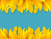 Sun Flower  Petal on Blue Color Background — Stock Photo