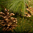 Royalty-Free Stock Photo: Chrismas decorations and pine cone