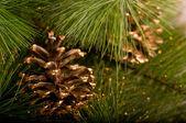Chrismas decorations and pine cone — Stock Photo