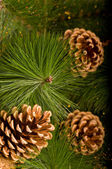 Chrismas decorations and pine cone — Stock Photo