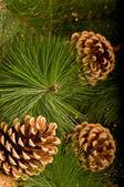 圣诞装饰品和松果 — 图库照片