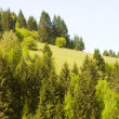 Spring mountains . Green landscape — Stock Photo