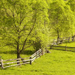 Spring field. Green landscape — Stock Photo