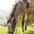 Horse on a summer mountain pasture — Stock Photo #26183445
