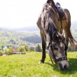 Horse on a summer mountain pasture - Stock Photo