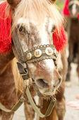 Portret czerwony koń — Zdjęcie stockowe