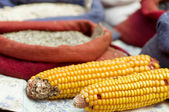 Dried corn cobs in a market — Stock Photo