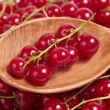 Fresh red currants on a wooden spoon — Zdjęcie stockowe