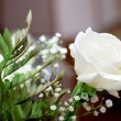 Beautiful wedding rose — Stock Photo
