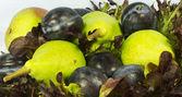 生菜和水果静物 — 图库照片