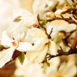 Close up of a branch with flowers — Stock Photo