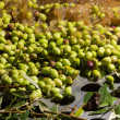 Stock Photo: Closeup of olives in olive oil machine